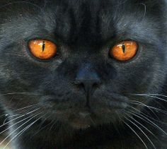 Sampson's Close-up by suzalayne @ Flickr - Photo Sharing!