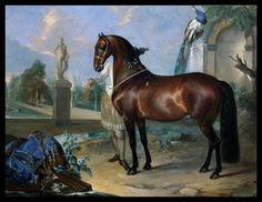 The bay horse Sincero