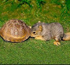 I knows you in dere...  #squirrels #tortoise #wildlife