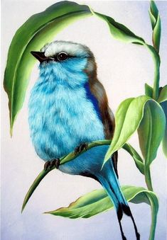 Bird Drawings, Animal Drawings, Pencil Drawings, Drawing Faces, Pencil Sketching, Horse Drawings, Realistic Drawings, Bird Pictures, Colorful Pictures