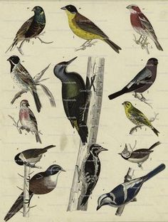 5 Collage Sheets Assorted VINTAGE Birds Special Offer  by joapan, $3.00