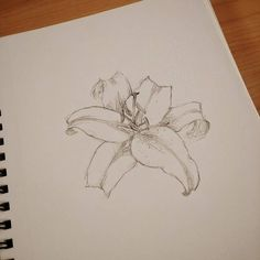 Sketching up an idea for my next painting. #Art #Flower #Lily #Artist #Drawing #Illustration #DailyArt #InstaDraw #InstaArt #InstaArtist #InstaGood #WorldofArtists #RochesterArtist #Pencil #Sketch #Doodle #Practice #WIP #Sketching #Sketchbook #TraditionalArt