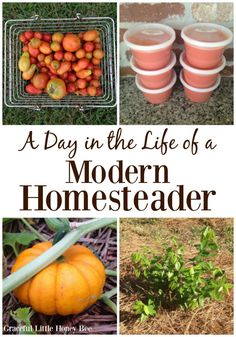See what this modern homesteader does all day including gardening, planting trees and making tomato sauce on gracefullittlehoneybee.com Organic Farming, Organic Gardening, Gardening Tips, Backyard Farming, Chickens Backyard, Farm Day, Mini Farm, Living Off The Land, Farms Living