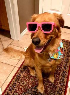 Rocking her stunner shades   http://ift.tt/2nMp6Uv via /r/dogpictures http://ift.tt/2oOeUdl  #lovabledogsaroundtheworld