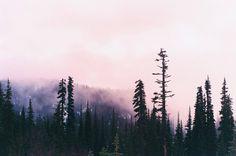 """northwezt: """" Mount Rainier, WA Flickr / Instagram """""""