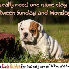 now that is the bulldog truth