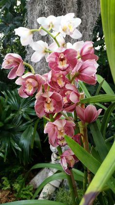The Orchid Show-The New York Botanical Garden
