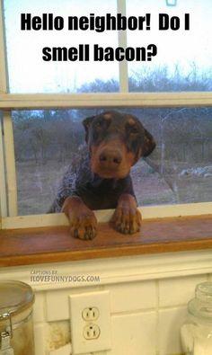 Hello neighbor! Do I smell bacon?