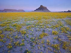 A rare happening: flowers in the desert by Ann Voskamp