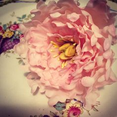 Open Japanese peony made by Maggie from Florabunda & Cake