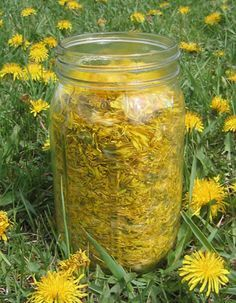 How to make Dandelion wine. & dandelion wine is delicious ! Homemade Wine Recipes, Homemade Alcohol, Homemade Liquor, Homemade Food, Kombucha, Dandelion Wine, Dandelion Jelly, Dandelion Recipes, Wild Edibles