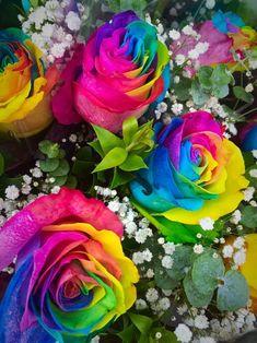 Rainbow Roses, Rainbow Colors, Beautiful Roses, Beautiful Flowers, Roman Regins, Floral Pattern Vector, Colours, Plants, Wallpaper