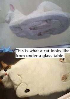 Cat on a table...hahaha!  Cat hoveround in the future