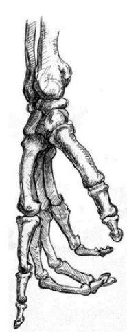 Anatomy Drawing Hand Bones, Dip Pen and Ink. Skeleton Drawings, Skeleton Art, Skeleton Hand Tattoo, Skeleton Dance, Anatomy Drawing, Anatomy Art, Human Anatomy, Anatomy Reference, Art Reference