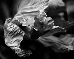 Abstract flower black and white photography black and by lmlphoto, $30.00