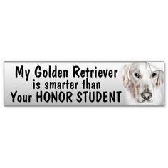 Golden Retriever - smarter than student - funny Bumper Stickers