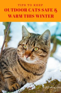 For stray/feral cats