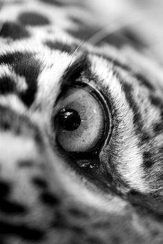 Big Cat's Eye ≧^◡^≦ °