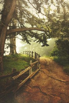 """lsleofskye:  """"Choose the path that's right for YOU  """""""