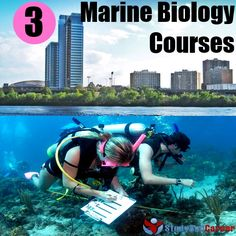 Top 3 Marine Biology Courses In The US! Could lead to a great job in water. @brenhirst