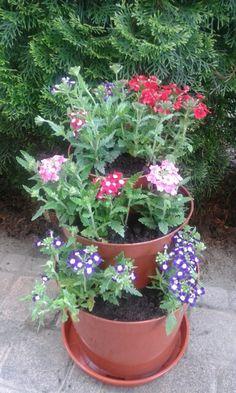 Flowers in our garden.