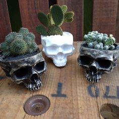 Mais encomendas!!  [Modelo vaso/cinzeiro com planta] . #iscool #skull #caveira #caveiras #coisasdecaveira #handmade #caveirismo #instaskull #curitibacool #curitiba #cwb  #curitibahandmade #comprasonline #decoração #decor #curitibadecor #arte #art #gesso #cranio #calavera #suculenta #succulent #cactus #succulovers #succulentlove #amosuculentas #decoraçãodeinteriores by iscool.cwb