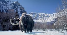 Woolly Mammoth at Arctic Polar Dome.