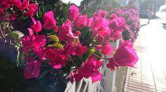 Spring Bucket List. | Mrs. Sparkle
