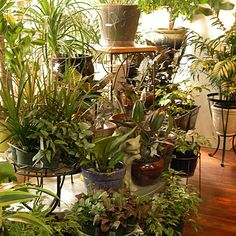 The best plants for apartments. How to grow houseplants and herbs in an urban apartment.