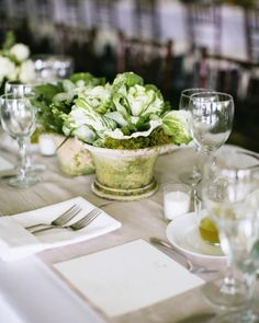 table with cabbage plants in terra cotta pots