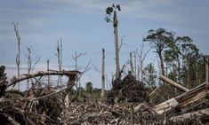 Banks lent £1.9tn linked to ecosystem and wildlife destruction in 2019 – report | Banking | The Guardian