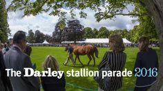 The Darley stallion parade at Dalham Hall Stud, July 2016