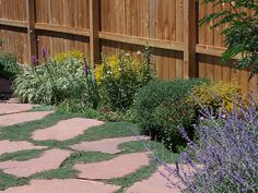 Low-Growing Plants Guide: Border Plants For Walkway | INSTALL-IT ...
