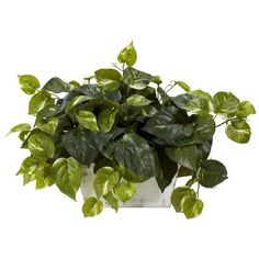 Nearly Natural 6713 Pothos with White Wash Planter Decorative Silk Plant Green -- This is an Amazon Affiliate link. You can get additional details at the image link.