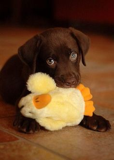 Pup and duck