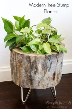 modern tree stump planter