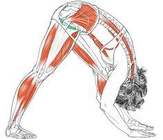 Eka Parsvottanasana:   El lado en practica  sufre un estiramiento intenso.  La postura de la Pirámide