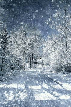 Walking in a Winter Wonderland #WinterScenes
