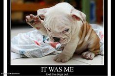 YES! too cute(: