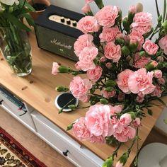Flower Aesthetic, Pink Aesthetic, My Flower, Beautiful Flowers, Bloom Baby, Jolie Photo, Decoration, Planting Flowers, Floral Wreath
