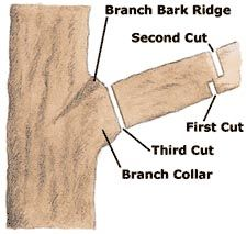 How to Prune Your Trees by lowes: When removing heavy branches, avoid ripping the bark by shortening the branch to a stub before cutting it off at the branch collar. Use a sharp pruning saw and make these three cuts. #Trees #Shrubs #Pruning