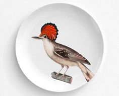 A personal favorite from my Etsy shop https://www.etsy.com/listing/469683349/atlantic-royal-flycatcher-bird-plate
