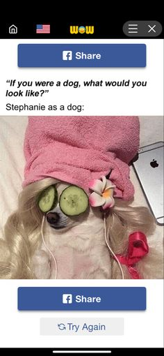 Fun Quizzes, Try Again, Dogs, Pet Dogs, Doggies