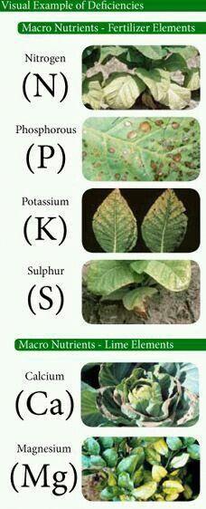 Nutrientes em deficiência #hydroponicgardening #hydroponicgardeningtips