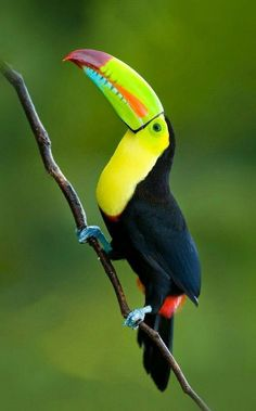 Animals, Street, Natural, Landscape and more. Pretty Birds, Beautiful Birds, Animals Beautiful, Rare Birds, Exotic Birds, Tropical Birds, Colorful Birds, Animals And Pets, Cute Animals
