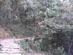 Zbior drzewa na opal w Himalajach Pothana APC