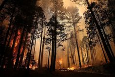 14 Powerful Photos Of California's Massive Rim Fire