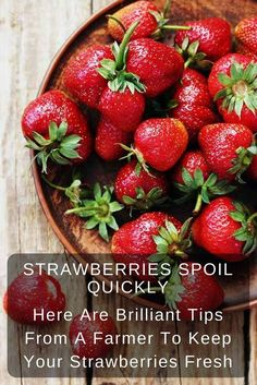 Home Made Doggy Foodstuff FAQ's And Ideas Keep Your Strawberries Fresh Longer With This Great Tip. This Is Definitely The Best Way To Store Strawberries And It Even Extends To Other Fruits And Vegetables. In the event that You Want To Keep Your Fruits And Betty Crocker, Healthy Snacks, Healthy Eating, Healthy Recipes, Eating Clean, How To Store Strawberries, Storing Strawberries, Storing Fruit, Frozen Strawberries