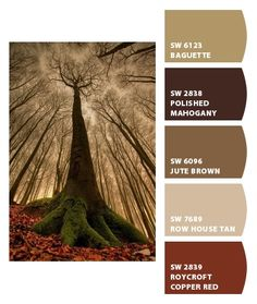 Paint colors from Chip It! by Sherwin-Williams Debating these for the kitchen with a coffee theme...