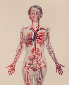 L'artiste chilienne brode l'anatomie avec délicatesse sur ses autoportraits.